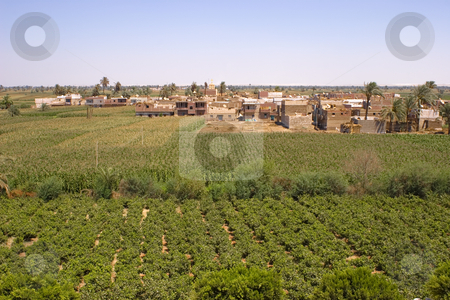 Vines Village stock photo, Vines agriculture on harvest time in El-Minya, Egypt. by Amr Hassanein