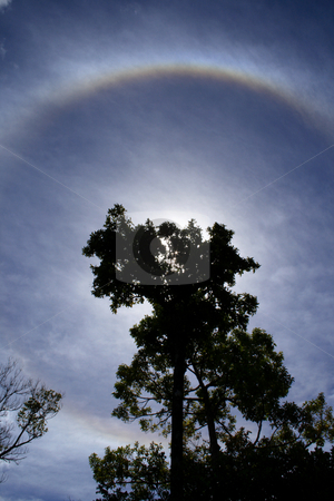 Halo_004 stock photo, Backlit tree and halo, a meteorological phenomenon, in a cloudy sky. by Steeve Dubois