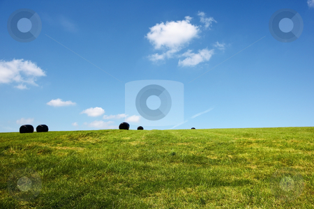 Hay field stock photo, Hilltop hay field with black wrapped bales under a summer sky by Mike Smith