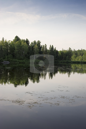Reflection in a lake stock photo, Tree reflecting in a lake by Yann Poirier