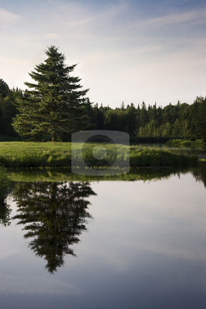 Pine reflecting in lake stock photo, Lonely pine tree reflecting in lake early in the morning by Yann Poirier
