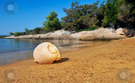 Seashell on a sandy beach in the Mediterranean stock photo, A seashell lying on a sandy beach in the Mediterranean, under a clear blue sky by Andreas Karelias