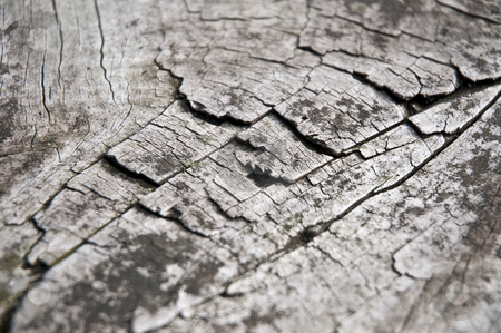 Cracked wood stock photo, Cracked wooden table macro. by Anibal Trejo