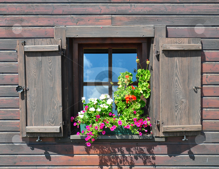 Flowers at window stock photo, Flowers at window by Robert Biedermann