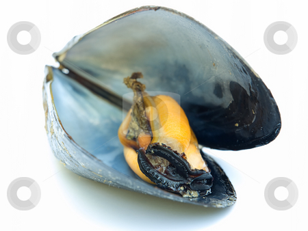 Mussel stock photo, Just a open boiled mussel on a white background. by Sinisa Botas