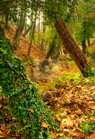 Autumn in the forest stock photo, Picture of a thick forest dressed in vivid autumn colours. by Andreas Karelias