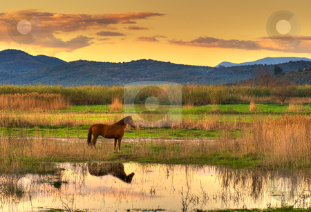 Horse in landscape stock photo, Lone horse in a spectacular late afternoon landscape. by Andreas Karelias
