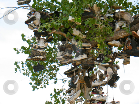 Shoe Tree1 stock photo, Churchill County, Nevada US 50 near Middlegate by John Dickinson