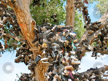 Shoe Tree4 stock photo, Churchill County, Nevada US 50 near Middlegate by John Dickinson
