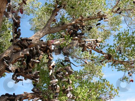 Shoe Tree5 stock photo, Churchill County, Nevada US 50 near Middlegate by John Dickinson