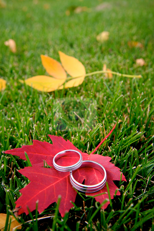 Rings in the Fall stock photo, Two wedding rings sitting on a red maple leaf. by Sharon Arnoldi