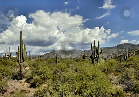 Desert landscape stock photo, Arizona desert landscape by Monica Boorboor