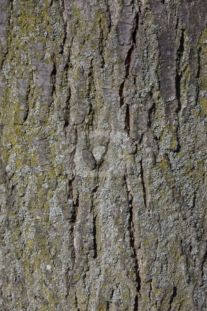 Tree bark stock photo, Close up shot of a tree bark with Lichen and moss by Darren Pattterson
