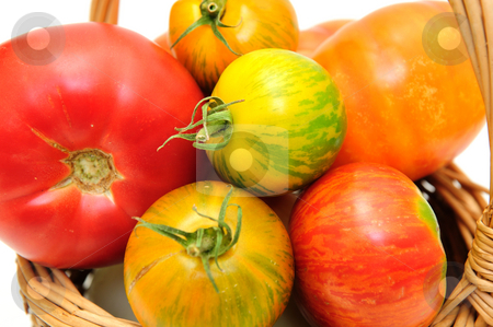 Colorful Heirloom Tomatoes stock photo, Multi colored heirloom tomatoes in a brown wicker basket by Lynn Bendickson