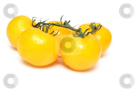 Yellow Heirloom Tomatoes stock photo, Heirloom tomatoes attached to a short section of vine isolated on a white background by Lynn Bendickson