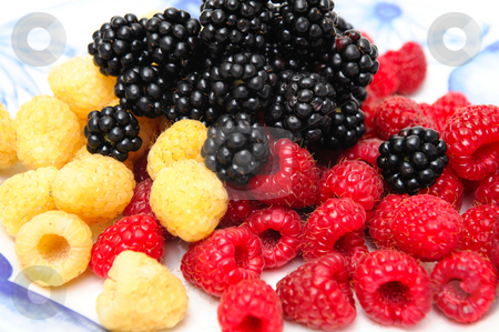 Assorted Berries stock photo, Red and golden raspberries topped with fresh blackberry served on an old fashined blue and white plate. by Lynn Bendickson