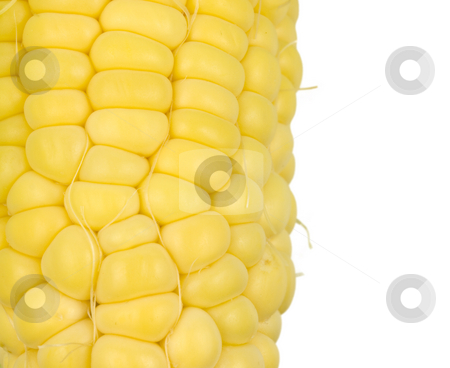Corn Kernals Close up stock photo, Corn Kernals Close up on a white background by John Teeter