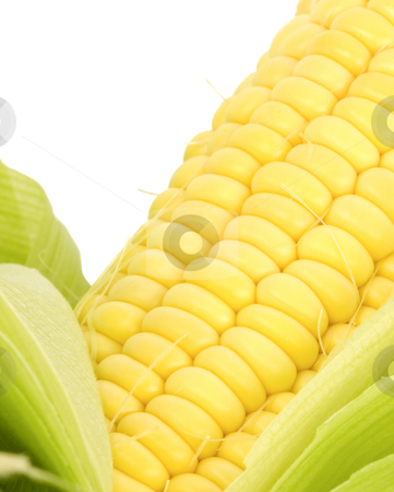 Corn Close Up stock photo, Corn Kernals Close up on a white background by John Teeter