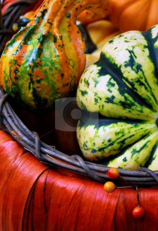 Fall gourds stock photo, Basket of fall gourds by Monica Boorboor