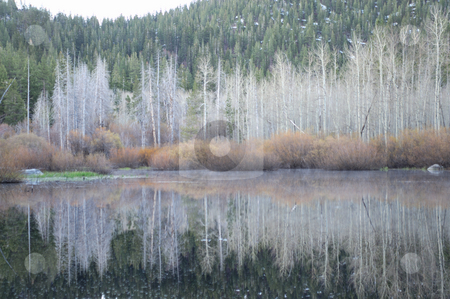 Winter Reflection stock photo, Bare Aspen trees and bushes are reflected in the calm lake in the sierra nevada mountains in the winter season. by Lynn Bendickson
