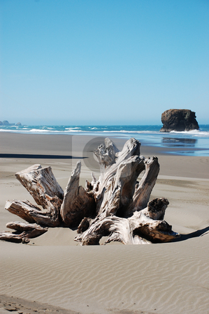 Driftwood on beach stock photo, Driftwood on Oregon beach by perlphoto