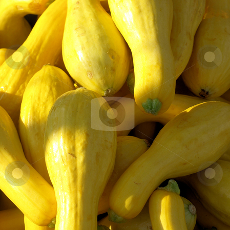 Yellow squash stock photo, Yellow squash for sale at the farmers market. Shown close up. by Tim Markley