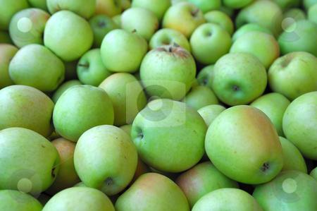 Green Apple stock photo, Fresh harvested green apples by Lynn Bendickson