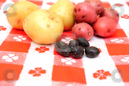Red, white and purple peruvian potato stock photo, Red, white and purple peruvian new small potatoes isolated on a white background by Lynn Bendickson