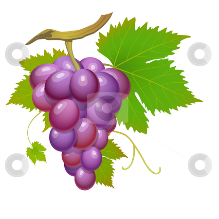 Purple grape stock vector clipart, Purple grape cluster with green leafs isolated by Laurent Renault