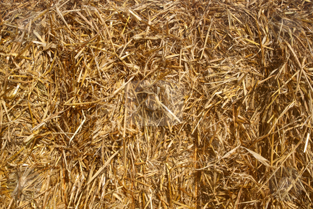 Close up of a straw bale. stock photo, Close up of a straw bale. by Stephen Rees