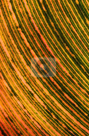 Close up of a tropical leaf changing color. stock photo, Close up of a tropical leaf changing color. by Stephen Rees