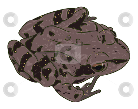 Spotty frog stock vector clipart, The beautiful spotty brown frog (amphibian) sits. There is a vector variant. by Liubov Nazarova