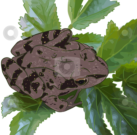 Frog on leaves stock vector clipart, The beautiful meadow frog sits on green leaves. by Liubov Nazarova