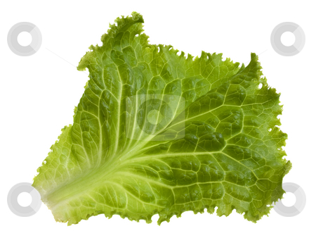 Green leaf of lettuce stock photo, Single green leaf of lettuce isolated on white by Marek Uliasz