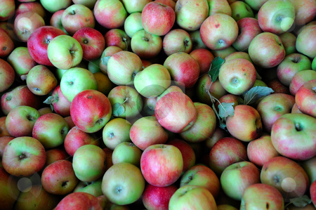 Red And Green Apple stock photo, Fresh harvested red and green apples with a few apple leaves mixed in by Lynn Bendickson