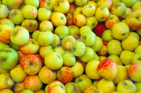 Green, Yellow  And Red Apple stock photo, Fresh harvested green and yellow apples partially turned red by Lynn Bendickson