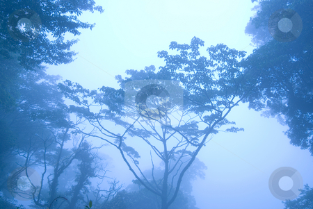 Blue morning in the forest with fog stock photo, Blue morning in the forest with fog, concept of mystery. by Lawren