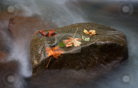 Resting Place stock photo, Autumn Leaves rest on a large rock within a rushing stream in the Washington Cascades by Mike Dawson
