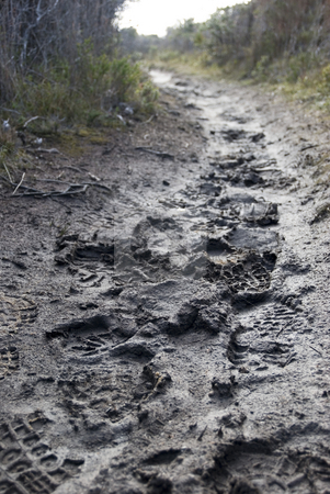 Muddy path stock photo, Foot prints in the mud on a walking trail by Stephen Gibson
