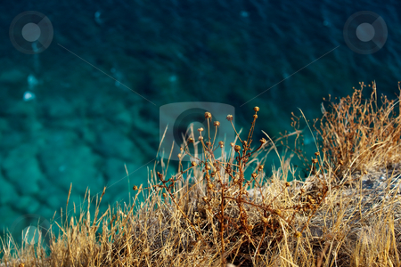 Natural background stock photo, Natural background of sea water and yellow dry grass with copy-space by Natalia Macheda