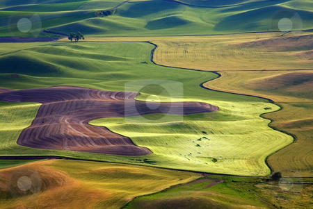 Crop Patterns stock photo, Lines and patterns of the various fields and crops of the Palouse Hills by Mike Dawson