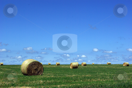 Iowa Hay Field stock photo, Large hay bales, weighing more than 1,500 pounds, look like an artistic display on a farm field in northeast Iowa with a background of blue sky and fluffy clouds on the norizon. by Dennis Thomsen