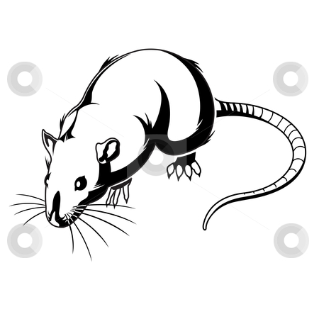 Rat Graphic stock vector clipart, A flat color rat graphic. Available as AI8 EPS. by Joshua Curtis