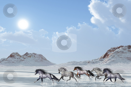 WINTER AFTERNOON stock photo, A herd of wild horses run in the snows of a bright winter day. by Corey Ford