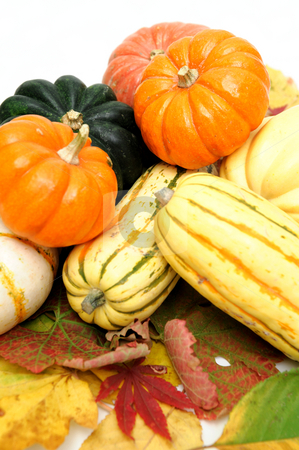 Squash stock photo, Assorted squash including green and white Acorn, Gold Nugget, Delicata, small pumpkins and Fall leaves on a light colored background. by Lynn Bendickson