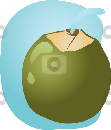 Young green coconut stock photo, Sketch of young green coconut, fruit illustration by Kheng Guan Toh