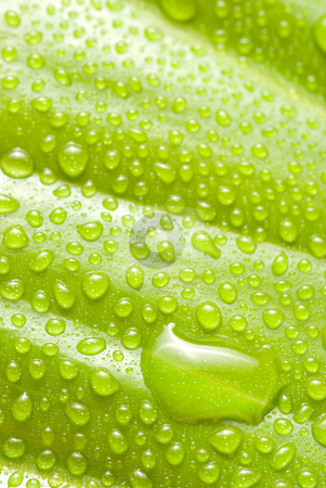 Rain drops on new leaf stock photo, Rain drops on new leaf, concept of freshness and spring by Lawren