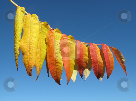 Colorful autumn leaves close up. stock photo, Colorful autumn leaves close up. by Stephen Rees