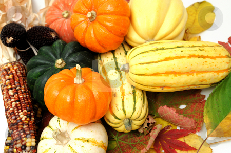 Fall Vegetables stock photo, Assorted squash including green and white Acorn, Gold Nugget, Delicata, small pumpkins and Fall leaves on a light colored background. by Lynn Bendickson