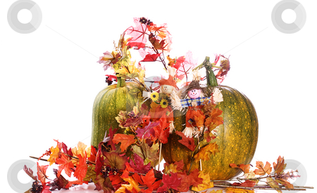 Autumn Foliage stock photo, Two ripening pumpkins along with some artificial fall foliage, isolated against a white background by Richard Nelson